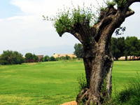 Open Escorpion Golf Course Page