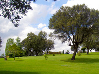 Open Las Encinas Golf Course Page