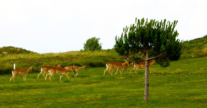 La Rasa de Berbes Golf Course - Photo 5